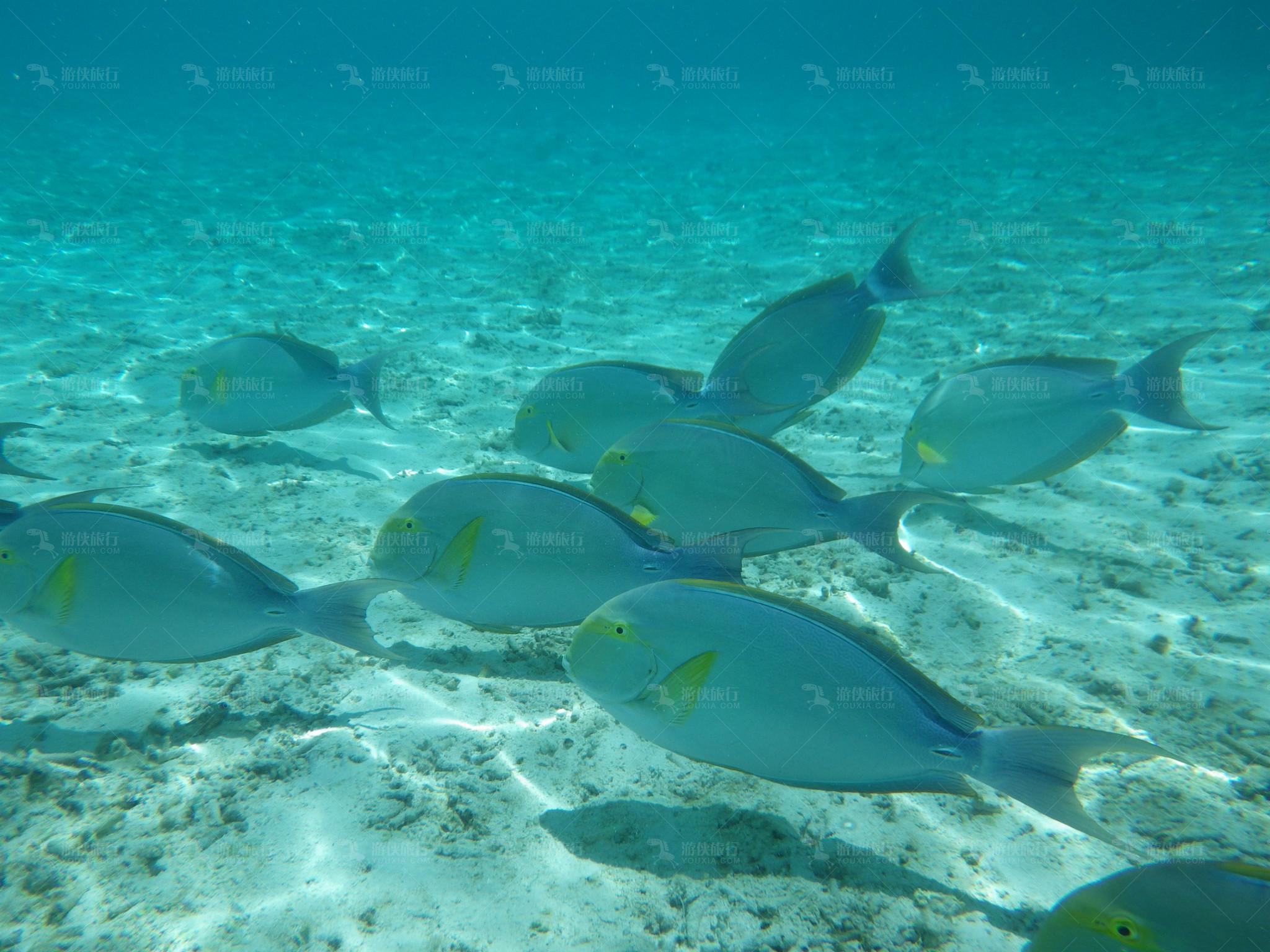 海洋生物众多