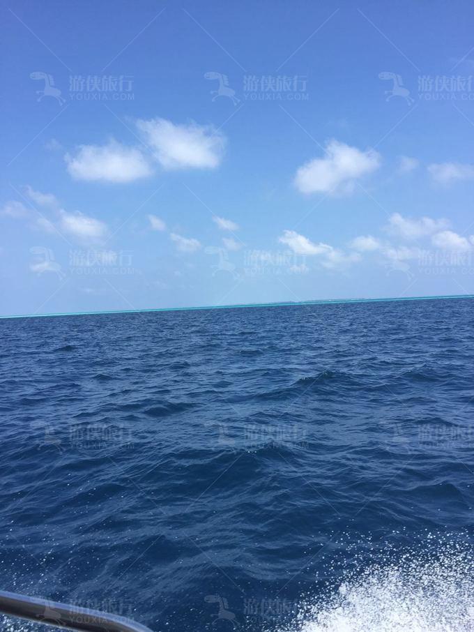 蓝色美人蕉海景