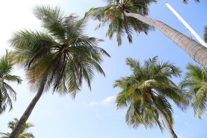 岛上棕榈树