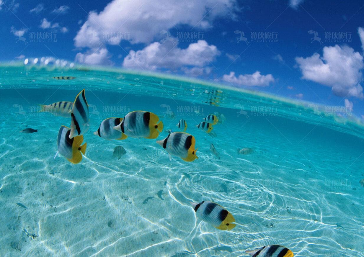马尔代夫热带鱼