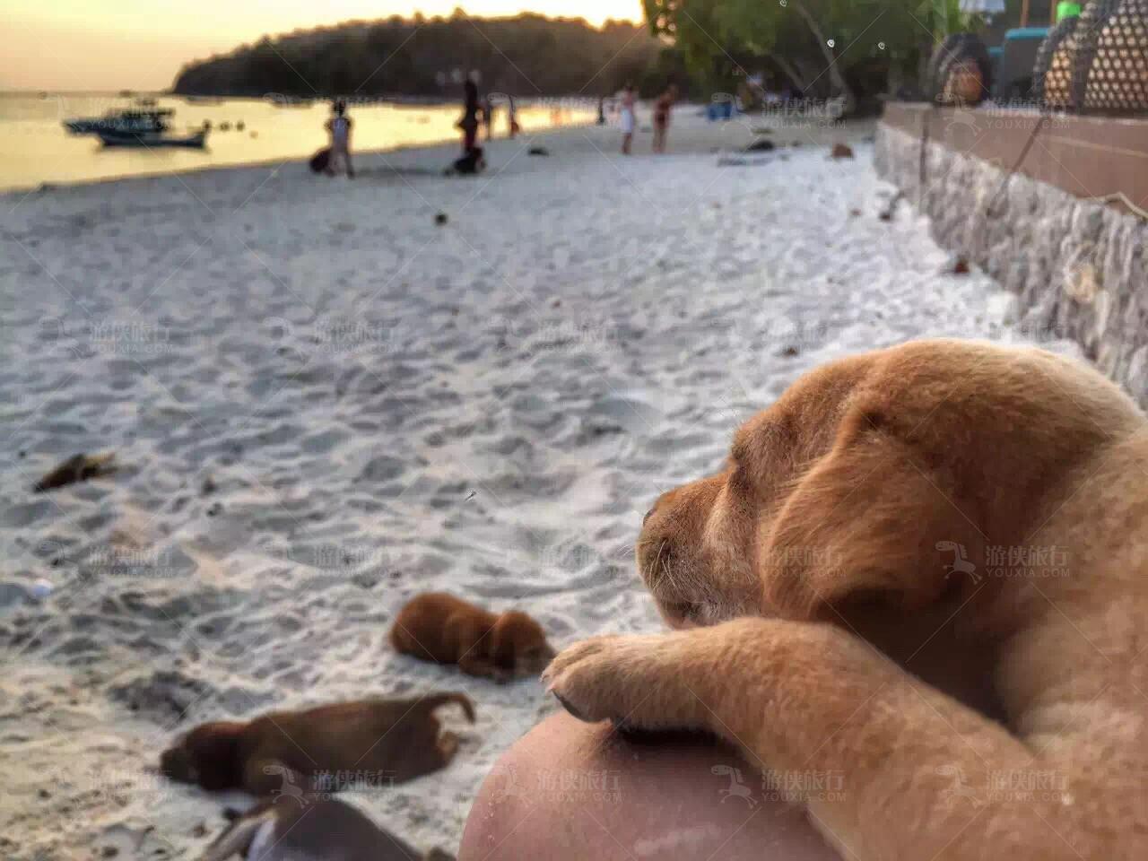 丽贝岛沙滩游侠抱着狗狗