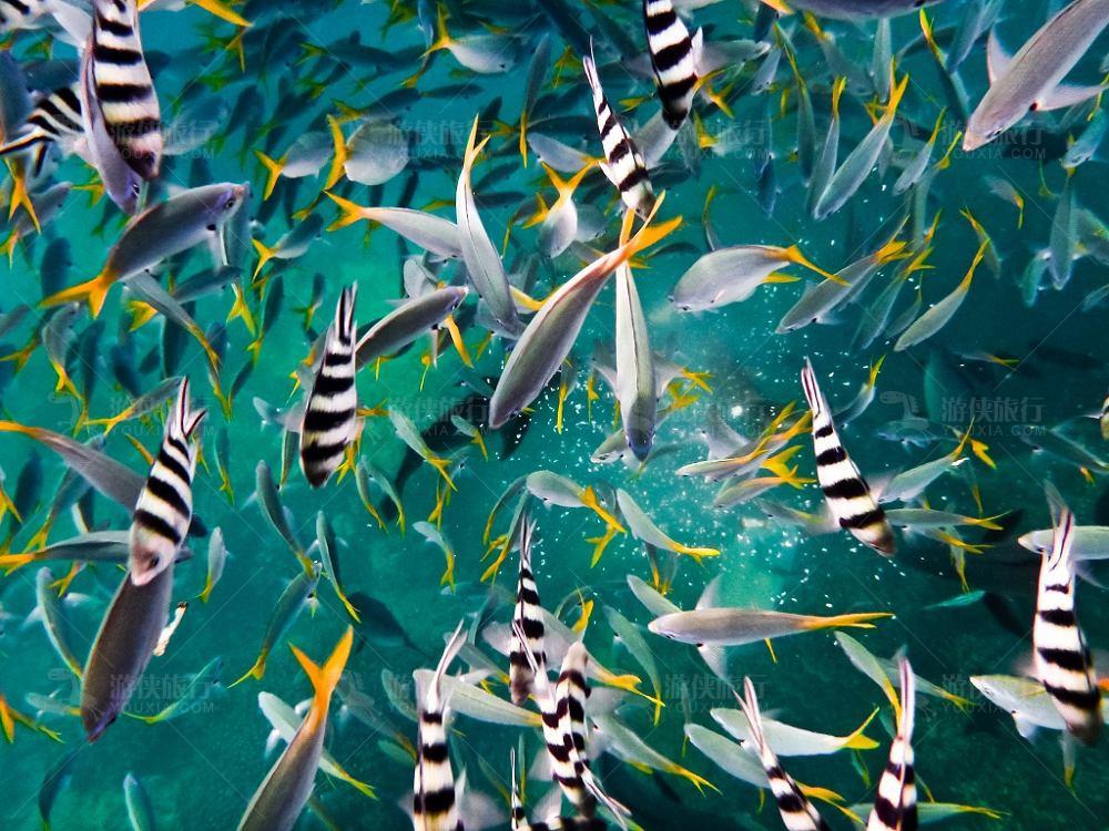 帕劳热带鱼