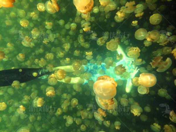 美丽生灵黄金水母