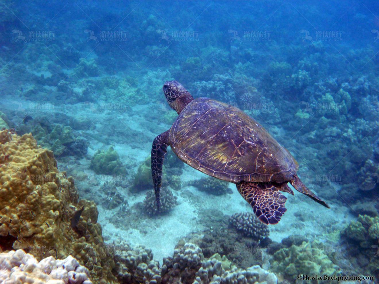 菲诺芙浮潜