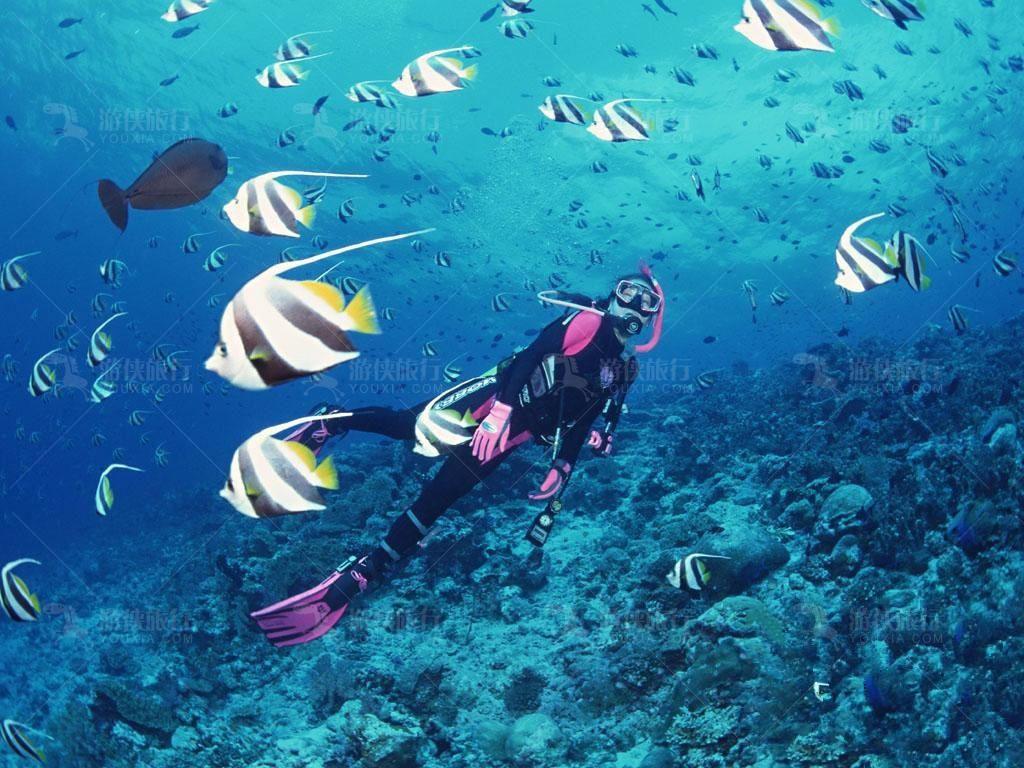 马尔代夫潜水水母衣