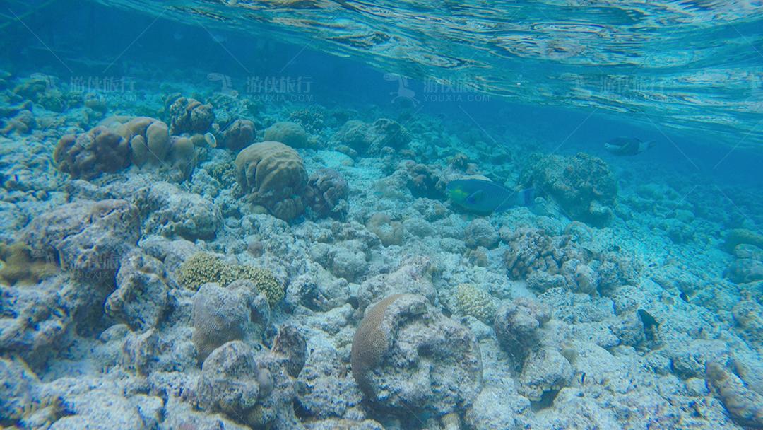 马尔代夫蜜都帕茹岛珊瑚群
