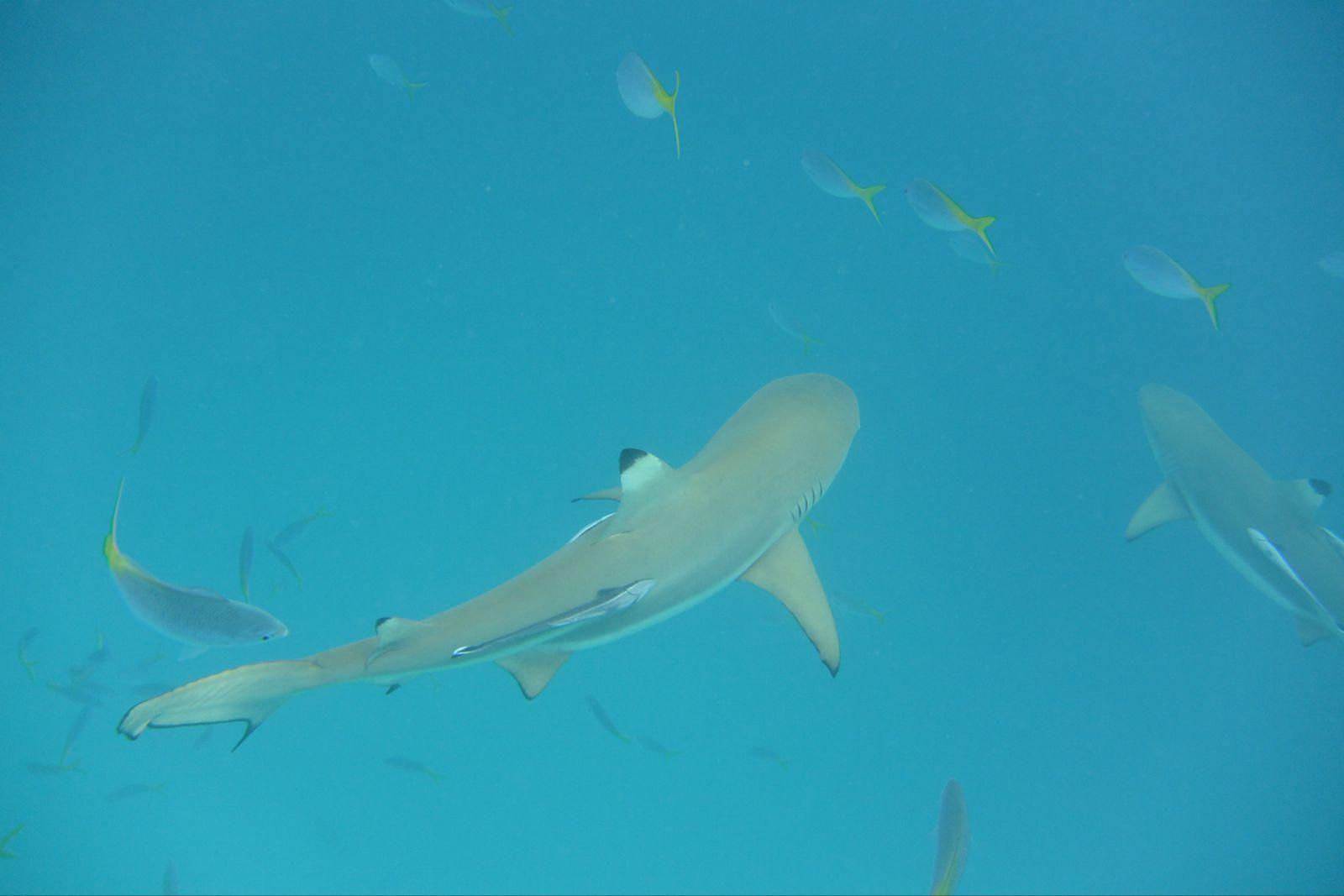 帕劳鲨鱼城