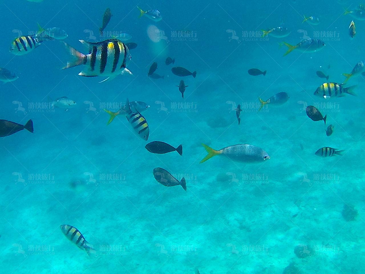 帕劳出海热带鱼