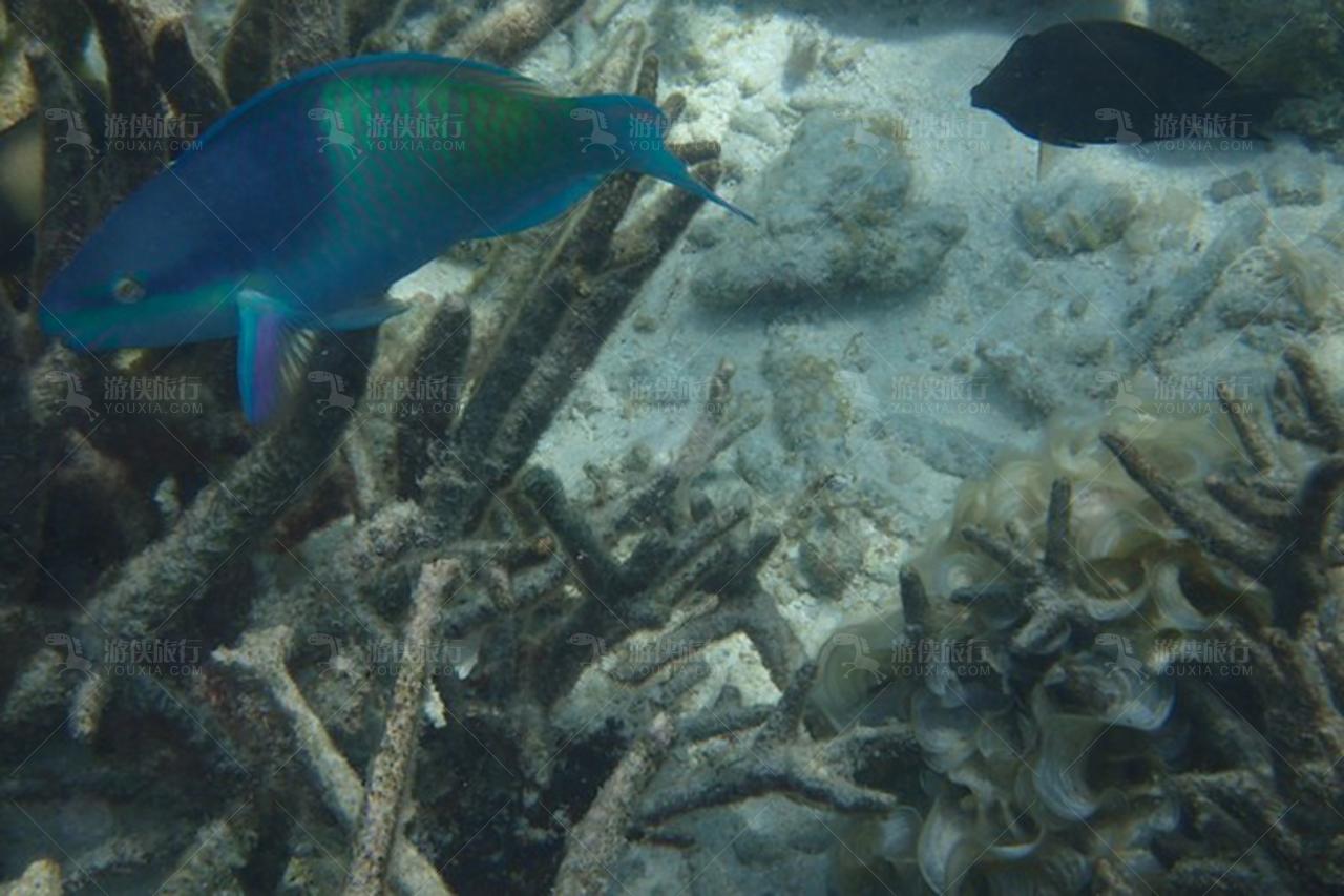 马尔代夫浮潜热带鱼