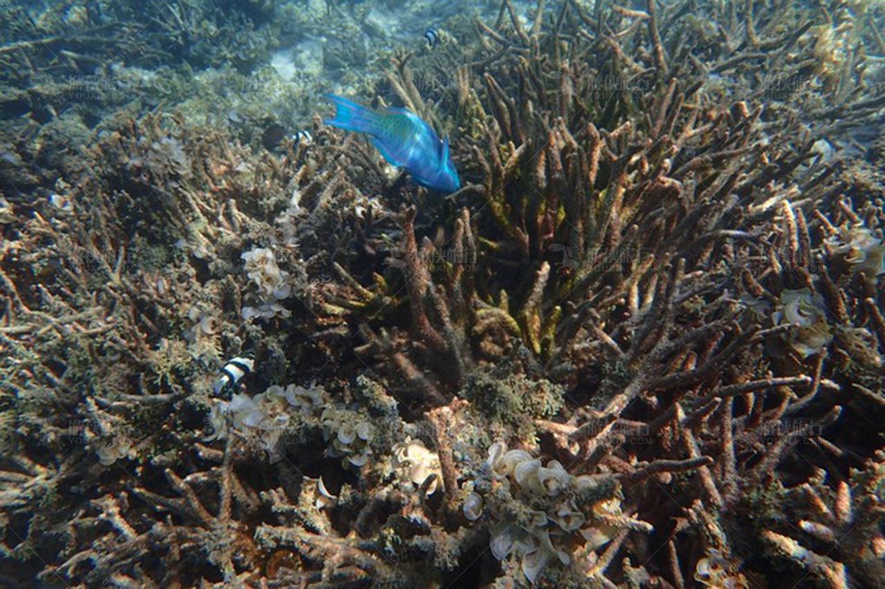 马尔代夫浮潜风景